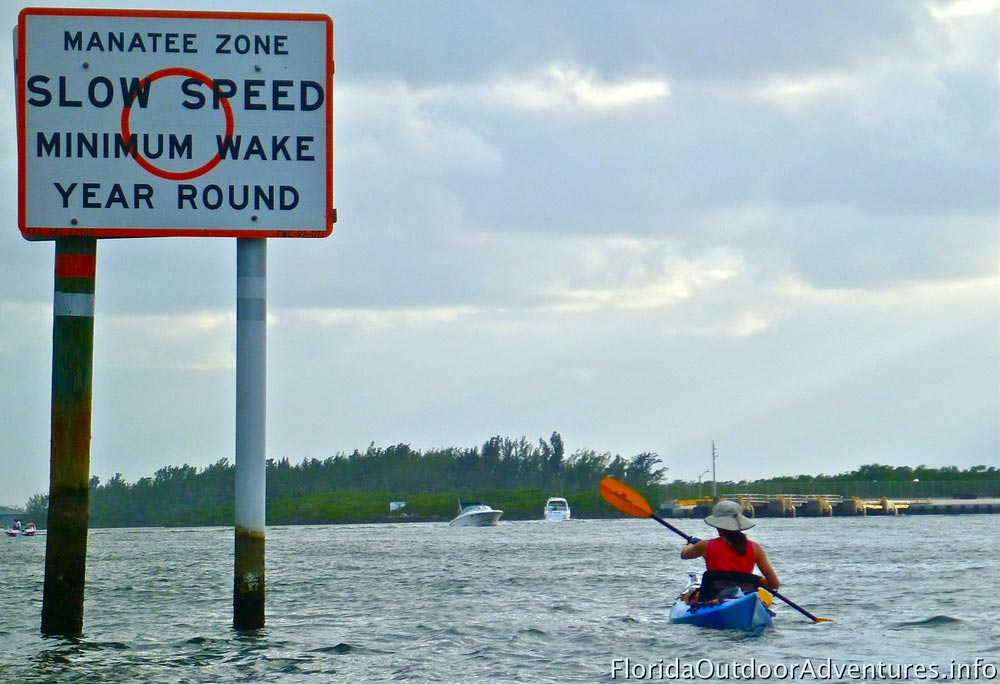 Kayaking-around-Dania-Beach-mangroves-floridaoutdooradventures.info-19.jpg