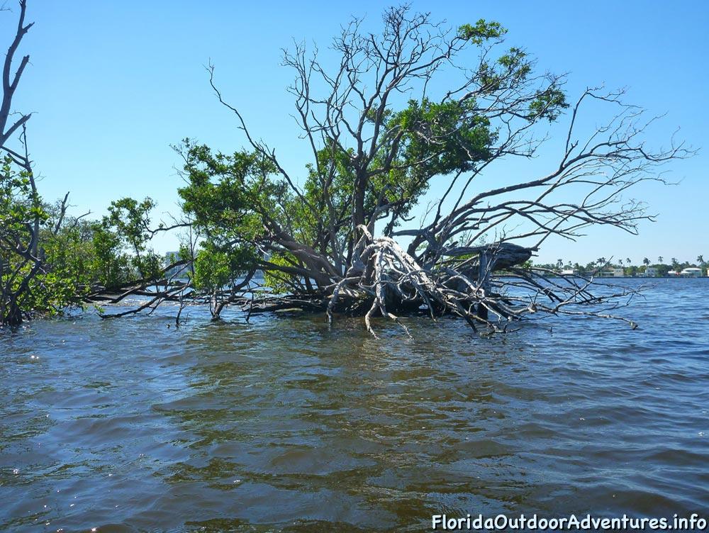 Lake-Worth-Lagoon-20121104-floridaoutdooradventures.info-01.jpg