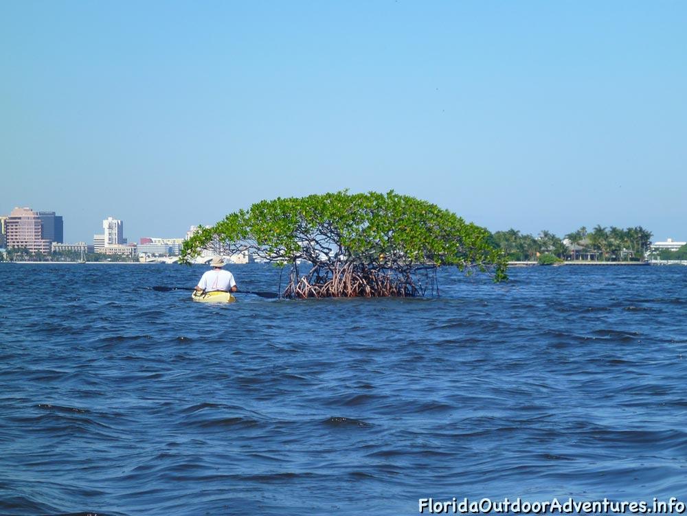 Lake-Worth-Lagoon-20121104-floridaoutdooradventures.info-02.jpg