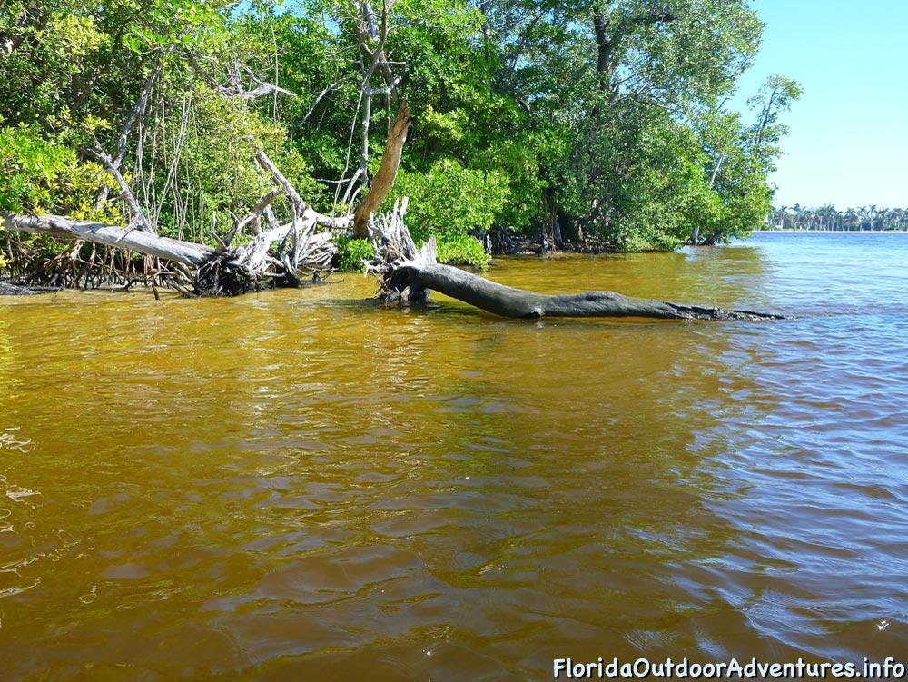 Lake-Worth-Lagoon-20121104-floridaoutdooradventures.info-04.jpg