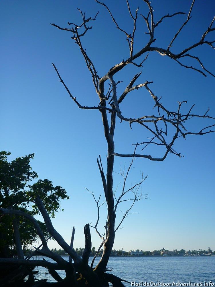 Lake-Worth-Lagoon-20121104-floridaoutdooradventures.info-08.jpg