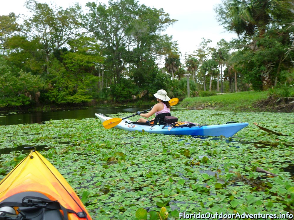 Kayaking-On-Loxahatchee-River-Under-The-Cypress-Tree-Canopy-01.jpg