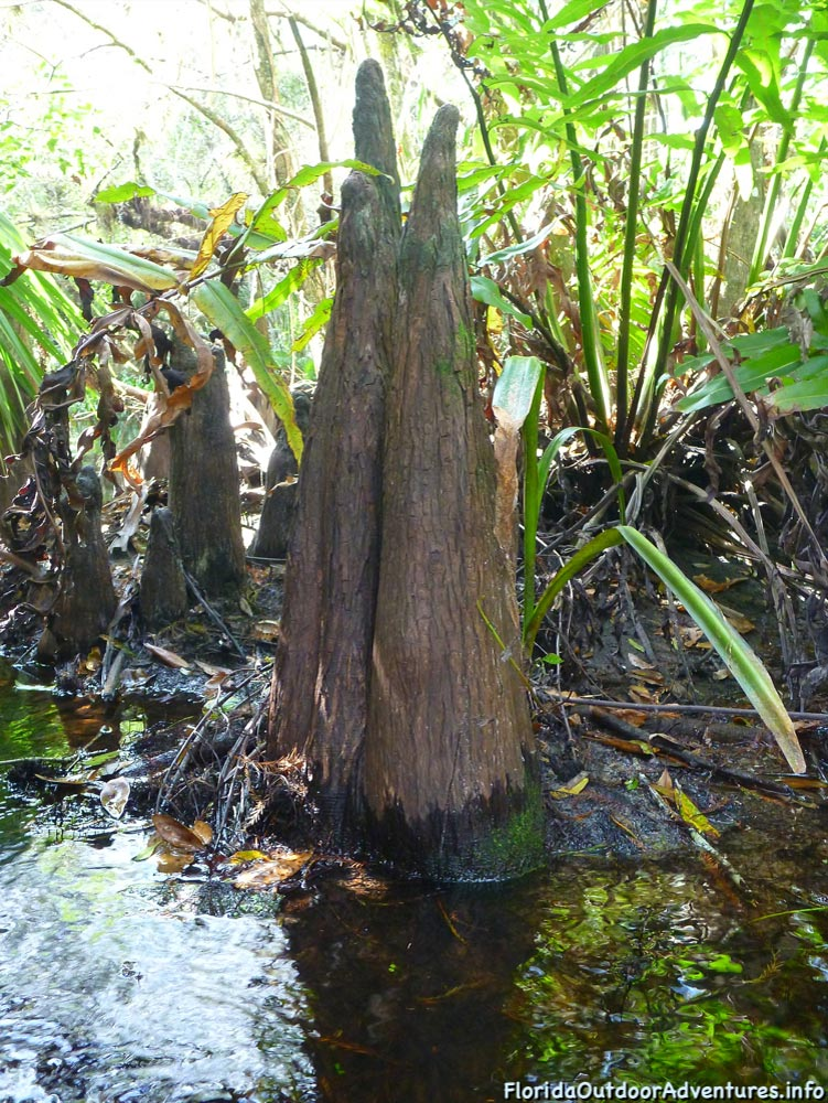 Kayaking-On-Loxahatchee-River-Under-The-Cypress-Tree-Canopy-09.jpg