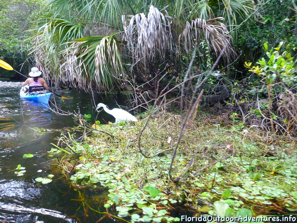 Kayaking-On-Loxahatchee-River-Under-The-Cypress-Tree-Canopy-10.jpg