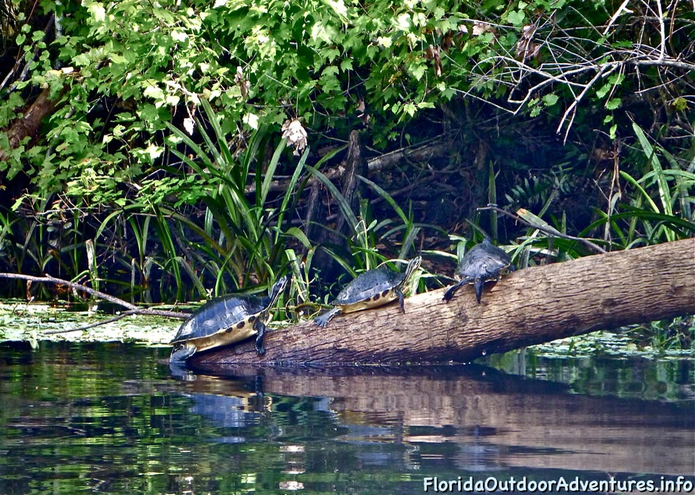 Kayaking-On-Loxahatchee-River-Under-The-Cypress-Tree-Canopy-14.jpg