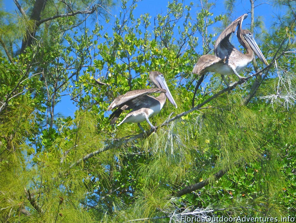 Oleta-River-State-Park-Maule-Lake-20130120O-floridaoutdooradventures.info-03.jpg