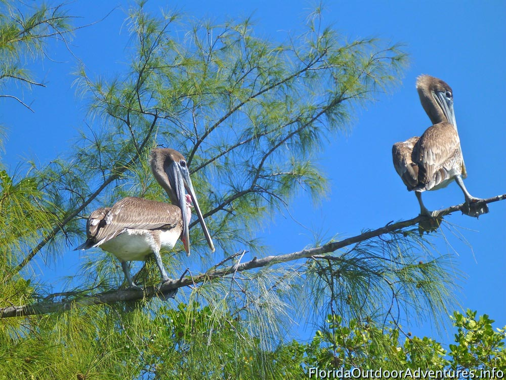 Oleta-River-State-Park-Maule-Lake-20130120O-floridaoutdooradventures.info-04.jpg