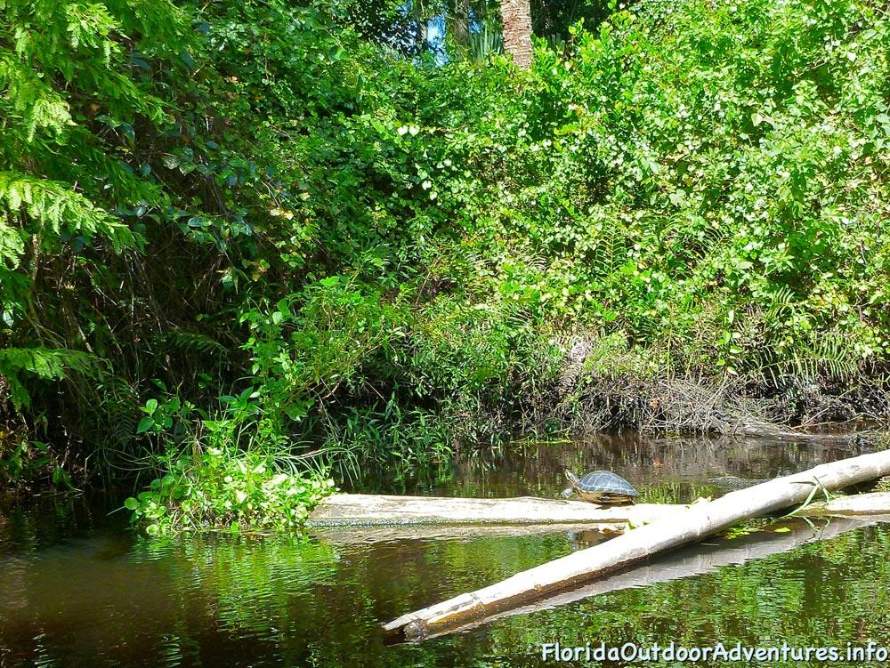 floridaoutdooradventures.info-loxahatchee-river-04.jpg
