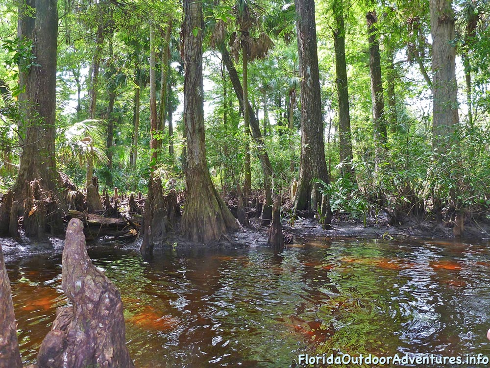 floridaoutdooradventures.info-loxahatchee-river-10.jpg