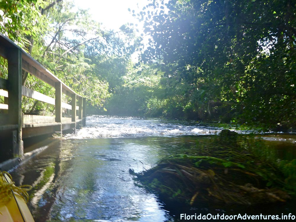 floridaoutdooradventures.info-loxahatchee-river-16.jpg