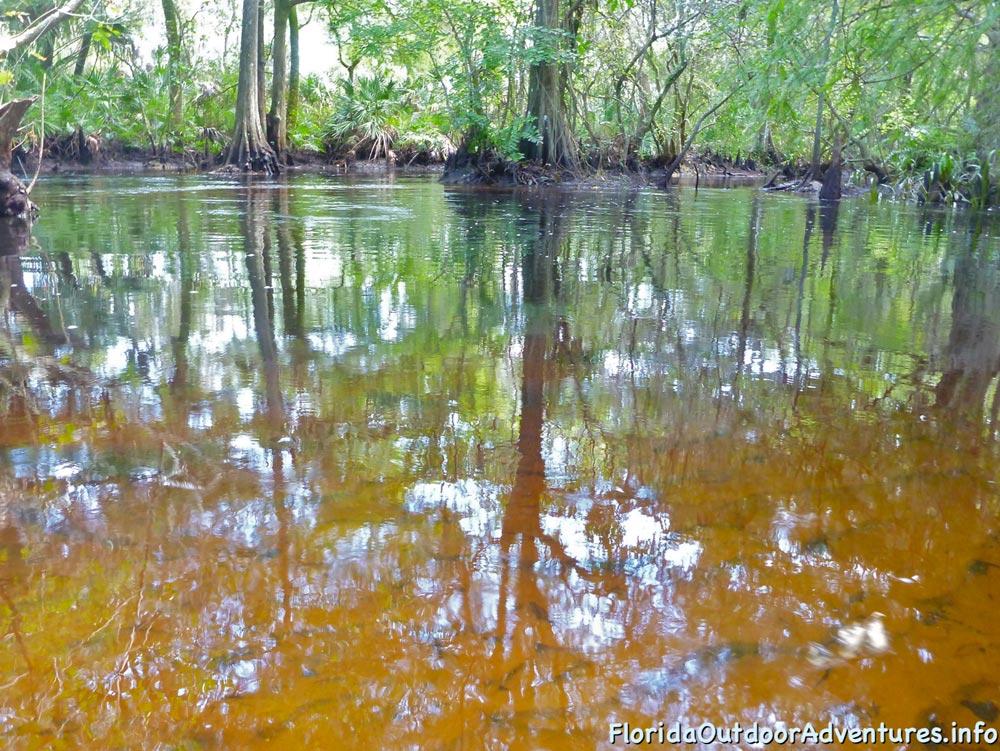 floridaoutdooradventures.info-loxahatchee-river-22.jpg