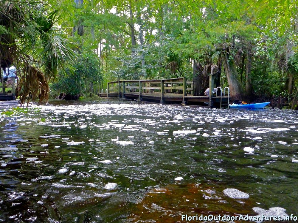 floridaoutdooradventures.info-loxahatchee-river-24.jpg