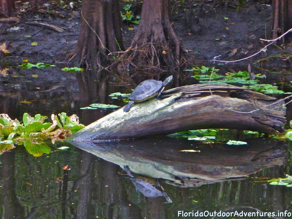 floridaoutdooradventures.info-loxahatchee-river-26.jpg