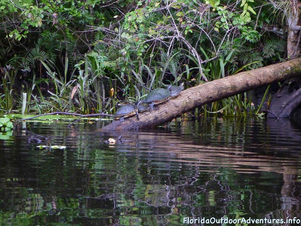 floridaoutdooradventures.info-loxahatchee-river-27.jpg
