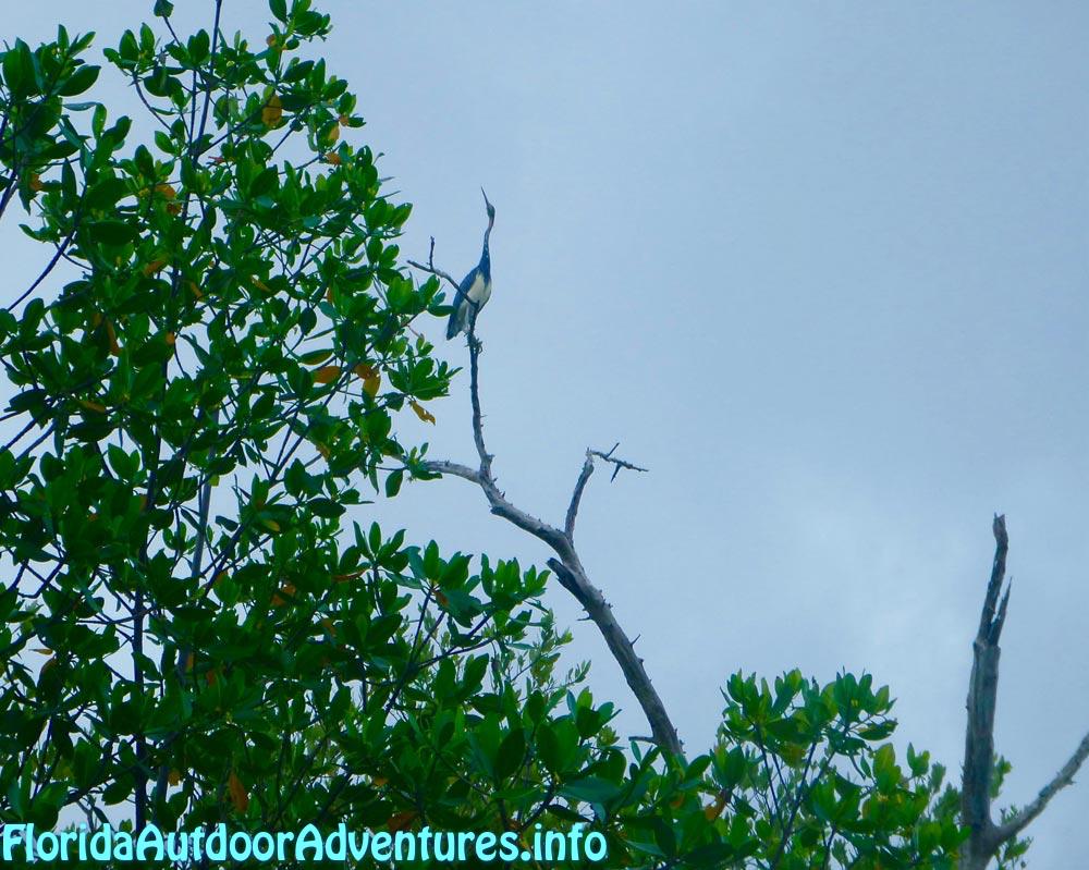 FloridaOutdoorAdventures.info-04.jpg