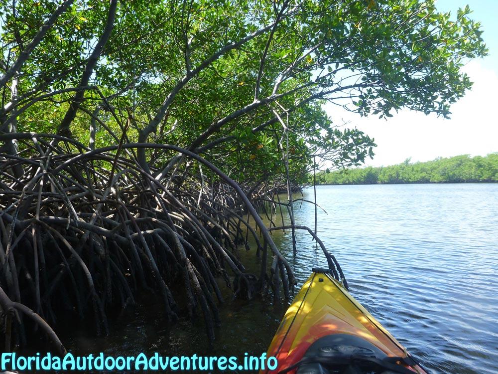FloridaOutdoorAdventures.info-08.jpg