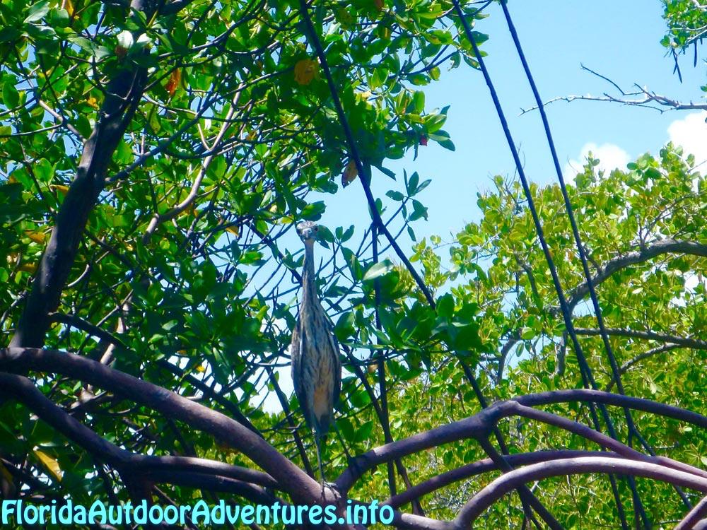FloridaOutdoorAdventures.info-11.jpg